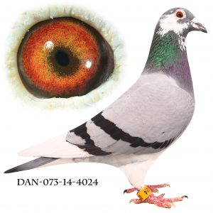 DAN073-14-4024 Flor Engels – Jos De Klak