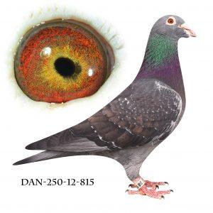 DAN250-12-815 Bronzemann. Superavler. Hebberecht