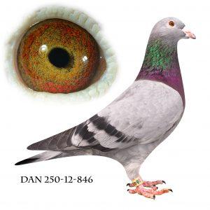 """DAN250-12-846 """"Drømme lady"""" Datter af Drømmen og Golden Lady."""