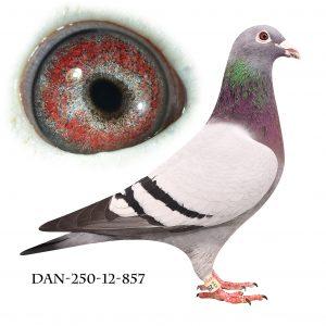 DAN250-12-857 Blå Brøbech