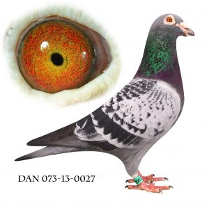 DAN073-13-27 Jos De Klak. Søn ar 8020 og Late Kras