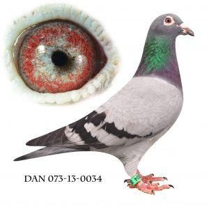 DAN073-13-34 Flor Engels. Barnebarn af 178