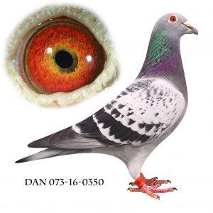 DAN073-16-350 Aarden-Hebberecht. Sektionsvinder Antwerpen