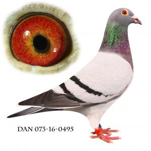 DAN073-16-495 Sektionsvinder Gotha