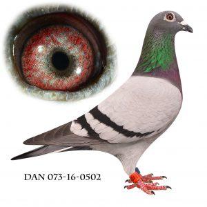 DAN073-16-502 Blå Brøbech