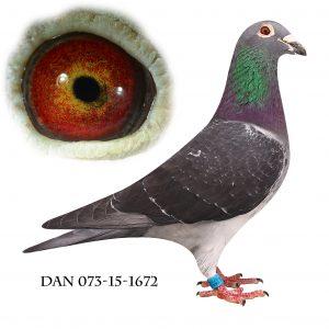 DAN073-15-1672 Gerringckx-Brøbech. Nr. 1/798 sekt. Altona 274km.