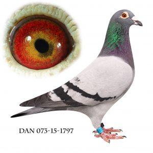 DAN073-15-1797. ES-Duer nr. 1 hanner lang DDB 2017