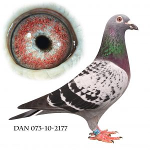 DAN073-10-2177 Jos De Klak. Super avler