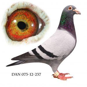 DAN073-12-237. Blå Brøbech. Barnebarn af nr. 2