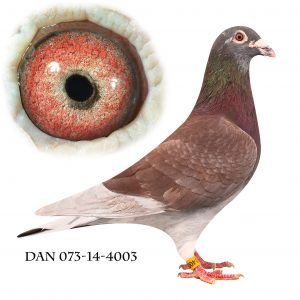 DAN073-14-4003 Janssen. Dark Red