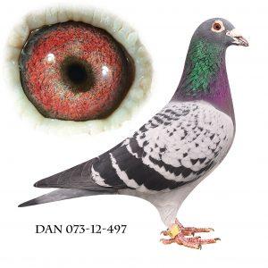 DAN073-12-497 Klak-Engels. OL-Due