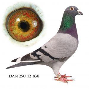 DAN250-12-838 Flor Engels. Dobbelt barnebarn af 178