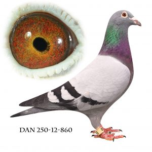 DAN073-12-860 Hebberecht. Dobbelt barnebarn af Jef