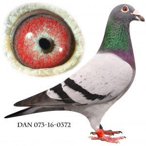 DAN073-16-372 Engels-Brøbech