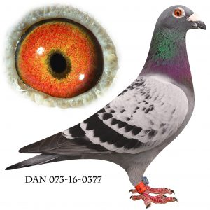 "DAN073-16-377 ""Gammel Dansk"" Nr. 4/270 Nat. Freiburg 910km."