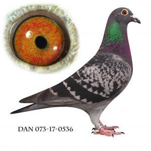 DAN073-17-536. Direkte på 848