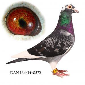 DAN164-14-572 Brøbech, Meget indavlet på 192+573
