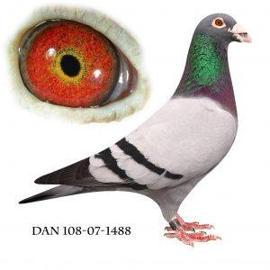 DAN108-07-1488 Søn af 632