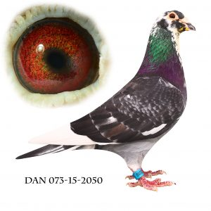 DAN073-15-2050 #Irakeren# Meget indavlet på 192+573