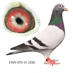 DAN073-11-2120 Klak-Janssen