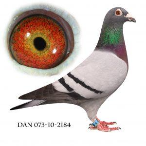 DAN073-10-2184 Blå Brøbech. Dobbelt barnebarn af 632