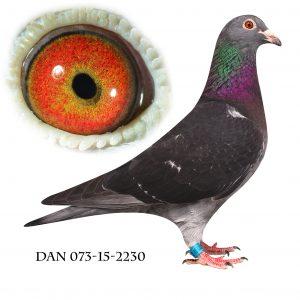 DAN073-15-2230 Van der Wegen