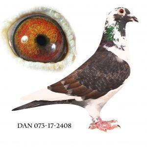 DAN025-17-2408 #Sort og hvid# Meget indavlet på 192+573