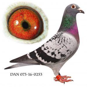 DAN073-16-253. Nr. 1/66 sekt. Nr. 5/429 Nat. Baden-Baden 811km.