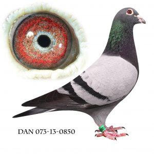 DAN073-13-850 Søn af Nationalvinder