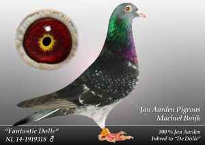 NL-14-1919318 Fantastic Dolle. 96*Dolles forældre