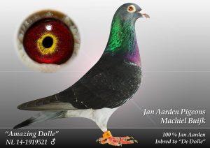 NL-14-1919521 Amazing Dolle. 34*Dolles forældre