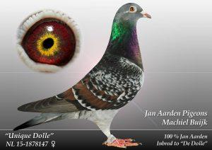 NL-15-1878147 Unique Dolle. 81*Dolles forældre