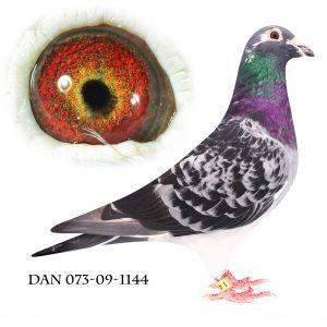 DAN073-09-1144 Brøbech Blåtavlet søn af 362