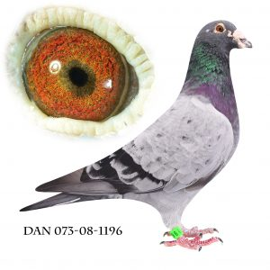 DAN073-08-1196 Brøbech Lang. Superavler