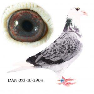 DAN073-10-2904 #Big Witte# Flor Engels. Barnebarn af 178+584