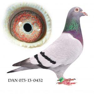 DAN073-13-432 Jos De Klak. Barnebarn af 613. Datter af 1187