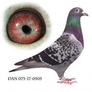 DAN073-17-505 100% Janssen. Søster til Regionsvinder