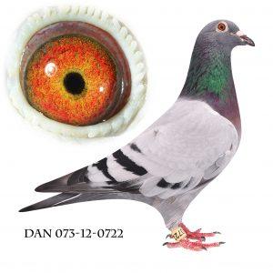 DAN073-12-722 Jos De Klak. Barnebarn af 613. Mor til sektionsvinder