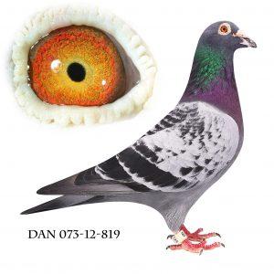 DAN073-12-819 Hebberecht. Top avler