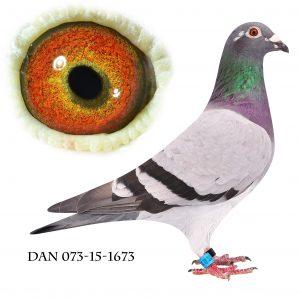 DAN073-15-1673 Datter af 847. Nr. 8/64 sekt. nr. 35/338 Nat. Karlsruhe 786km.