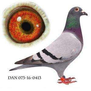 DAN073-16-413 Hebberecht-Engels. Nr. 4/446 Nat. Frieburg 910km.
